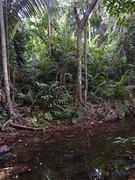 Junglesploitation
